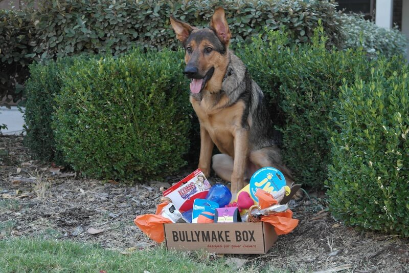 Dogs LOVE Bullymake Boxes!