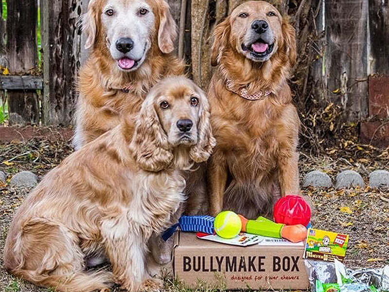 Subscription box for chewers