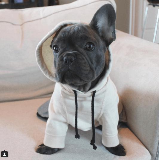 15 Reasons French Bulldogs SUCK!