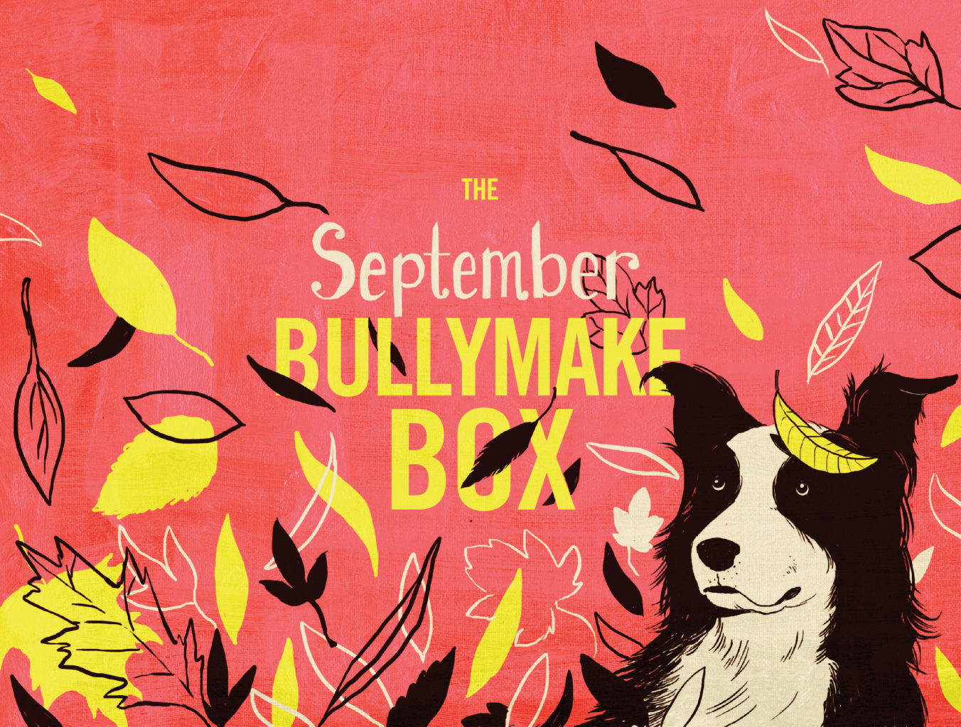 What S In The Box Bullymake Box A Dog Subscription